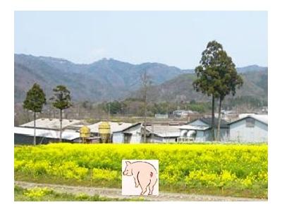 株式会社ウィルエージェンシー 農業推進プロジェクト(人材紹介部)/【養豚場スタッフ】こだわりの豚をいっしょに育てませんか!/4132