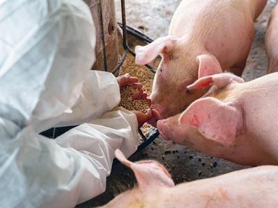 株式会社ウィルエージェンシー 農業推進プロジェクト(人材紹介部)/【養豚生産管理スタッフ】飼育、出荷作業など養豚作業全般/33251