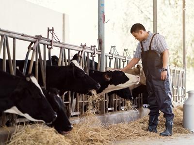 株式会社ウィルエージェンシー 農業推進プロジェクト(人材紹介部)/【肉用牛・乗用馬育成スタッフ】体験観光の運営も/6234